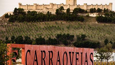 239 0 Pago Carraovejas1 1